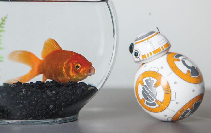BB8 and Fish